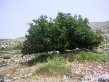 medium_falougha_014.jpg